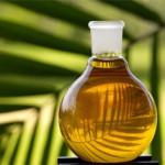 Пальмовое масло: мнение правительства Россиии